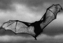 Bats / by Darren Starr