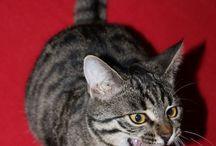 CatContent / Katzen - was sonst