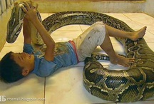 """The Cambodian boy and his """"sister,"""" the python"""
