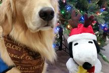 LCC Canine Christmas