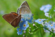 Kvetoucí ráj