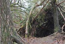 bush survival
