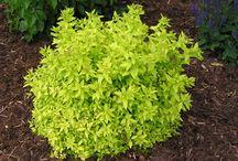 Home Grown, Shade Plants / by Beverlee Orr-Shadbolt