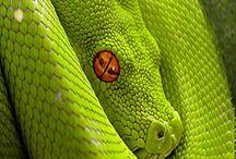 Snake tattoo idea