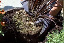 CA GROWN Planting