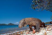 TN KOMODO / Taman Nasional Komodo adalah sebuah taman nasional yang terletak di dalam Kepulauan Kecil di Nusa Tenggara yang terdiri dari tiga pulau besar yaitu pulau Komodo, Padar dan Rincah, dan dikelilingi 26 pulau dengan ukuran yang lebih kecil.