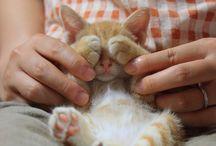Hide-N-Seek Pets / Peek-a-boo dogs and cats :)