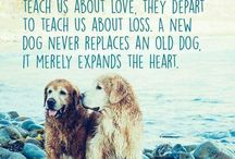Pet Quotes / Get your daily dose of inspiration from our furry family members