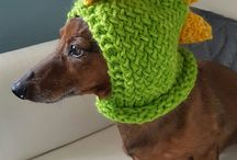 Dachshunds wearing Halloween costumes!