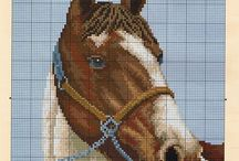 koníky
