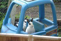 Kaninenenene / Inspirasjon til utegård