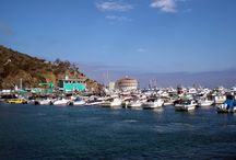 Catalina Baby!! / Love this place. Catalina ranks as my top favorite place to visit   / by Yvonne Bourassa Rouillard