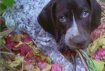 Cute doggies / by Crystal VanZant Sundy