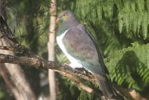 Birds / the native birds at the Bay of Many Coves and Queen Charlotte Sound