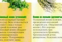 Веники для бани в Ассортименте Оптом и в Розницу. Нижний Новгород  тел.291-48-34
