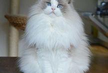 gaticos lindoa