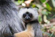 Madagascar / Photos from our trip to Madagascar