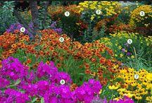 Цветники / Интересные идеи цветников, сочетания растений