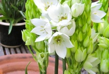 Záhrada, kvety Gardening