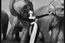 Photographers & Photographs / Mostly old, black & white