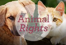 Animal Rights / by Dr. Harvey's