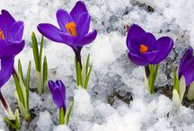 Winter Plants, Trees & Gardening Tips / Sure, we are in Indiana and snow may cover your yard some of the winter season, but a carefully planned yard can look great year round. We'll offer gardening tips and advice to make your yard look great even through a cold winter blast.