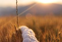 #wool #sunset #vlnkovo