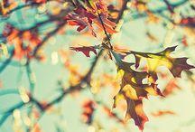 Autumn I ♥
