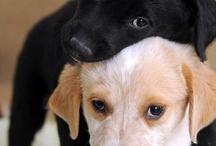 Puppy Pick Me Ups ❤