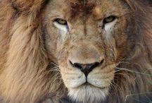 Passions / Nationaal ballet en stichting l leeuw