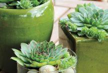 Pflanzen für innen