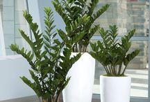 .Plants