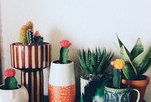 Upcycling with Cacti and Succulants / Planting Cacti is thrifted vessels such as jars, pots, teacups, boxes, hats, suitcases and more!