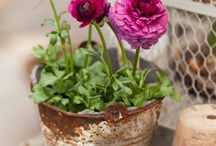 Stunning pot plants in containers