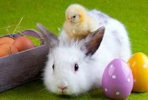 Happy Easter / Food Court Cergy wishes you a happy easter