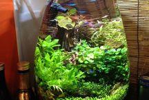 Aquarium / terrarium