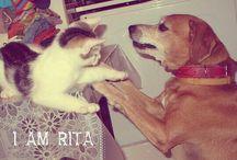 I am Rita