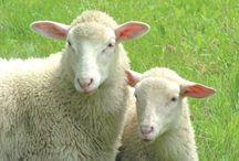 Wonderful Wool