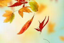 Autumn / by Anne Exley