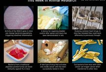 Animal Research / #Animal #Research