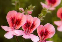 Kwiaty / Zdjęcia kwiatów
