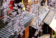 Sakura / Left my soul in Japan somewhere...