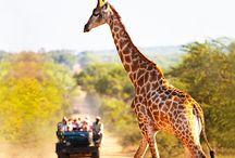 African safari / Africa
