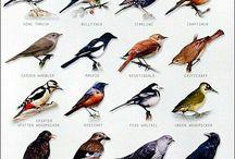 Diverse vogels afgebeeld
