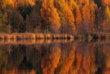Осень / Autumn