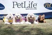 Pet Life Day no Pet Memorial em SJC