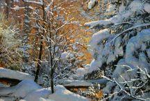 bosco nella neve al tramonto!!!!!!!