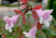 Garden plants / Beauty in the garden ;)