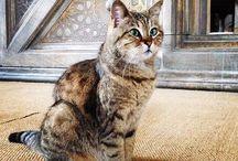 Cats in Turkey