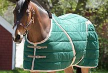Horsey stuff - rugs